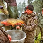 Fischbesatz 6.11.2016